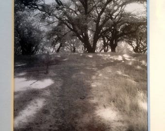 Oak Trees in Napa  (Infrared Black and White Photograph)