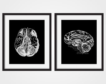 Anatomy Human Brain Art Print, Brain Art, Human Anatomy Set of Two 5x7, 8X10, 11x14 Medical Scientific Science Doctors Office Wall Decor