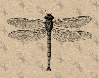 Vintage Dragonfly Printable black and white image Instant Download printable Antique retro drawing picture clipart digital graphic 300dpi