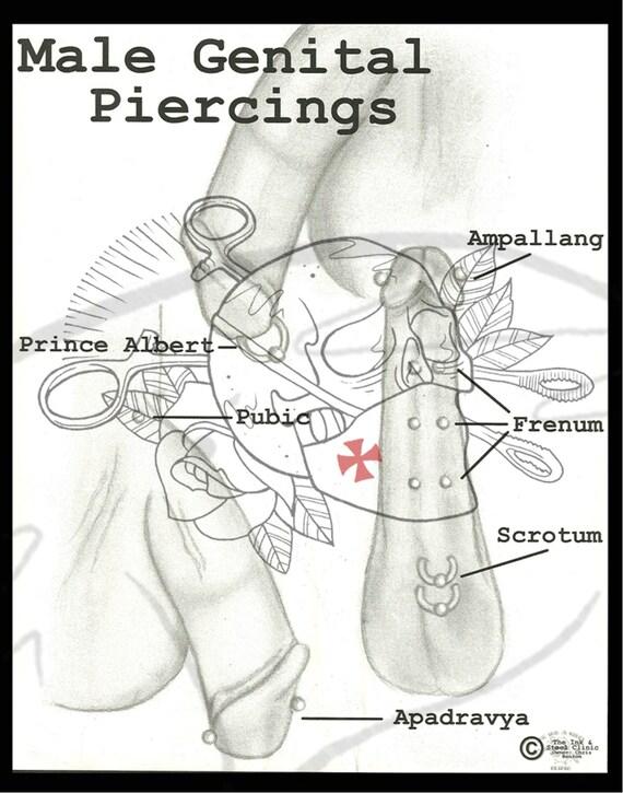 Items Similar To Body Piercing Diagram Male Genital Piercings