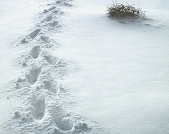 Fairy art print, footsteps in the snow 8x8 fine art photography, winter picture