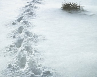 Fee Kunstdruck, Spuren im Schnee 8 x 8-Fine Art-Fotografie, Winter Bild
