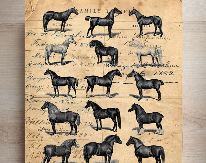 Vintage 1895 horses horse study rustic farmhouse decor art print custom choice background from antique paper VHS9384