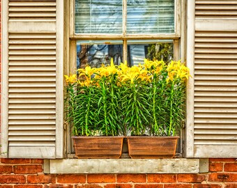 The Window Box, Savannah, Georgia