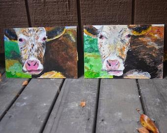 nantucket cows