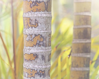 Bamboo Color Photo Print { green, yellow, brown, trunk, forest, sunlight, sunshine, chute, wall art, macro, nature & fine art photography }