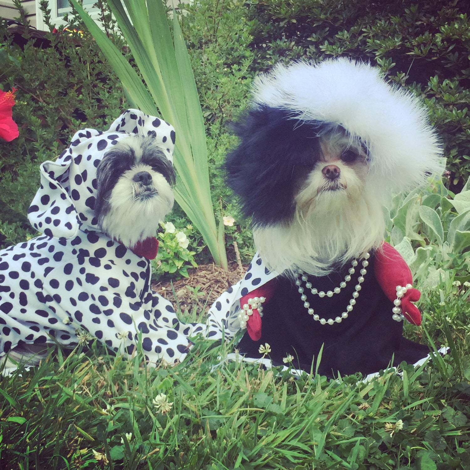 ?zoom & Dalmatian costume for dogs up to 20 pounds Cruela is