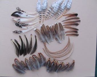 Mixed lot of select feathers for jewelry,crafts,fly tying,ear rings,including rooster pheasant,hackle,hen hackle,nice mixture of color/size