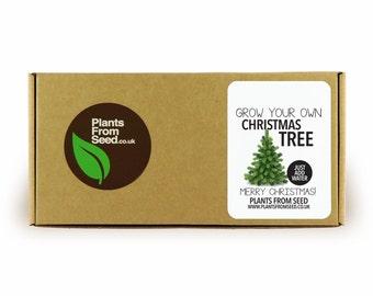 Grow Your Own Christmas Tree Mini Plant Kit
