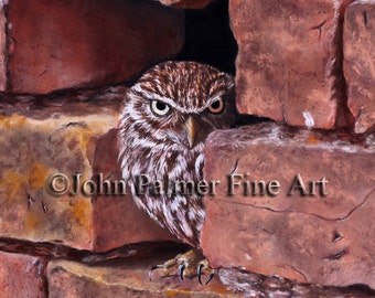Owl painting, owl picture, Little Owl print from my original pastel painting.