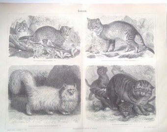 """Lithography, """"Cats""""."""