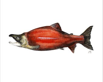 Sockeye salmon Giclée 8x10