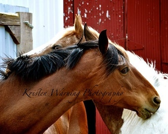 Horse Photos, Horses, Equines, Friends, Horse Pictures, Photography, Red, Greetings, Barns