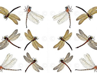 Dragonfly Water Slide Decals, Dragonfly Wedding And Party Decals, Decorate  Flame Less