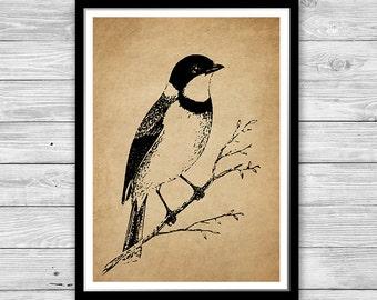 Bird Print vinatge style wall art Bird Poster Home decor Office decor Small Bird Print Textured Paper or Cotton Canvas many sizes DIA06