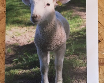 Cute Lamb Greetings Card, Blank Photo Card & envelope, Birthday Card, Cute Animal card, Cute Card, thank you card, Easter Card, notelets