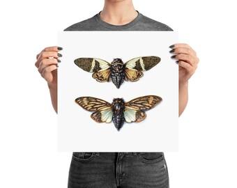 Cicadas Poster