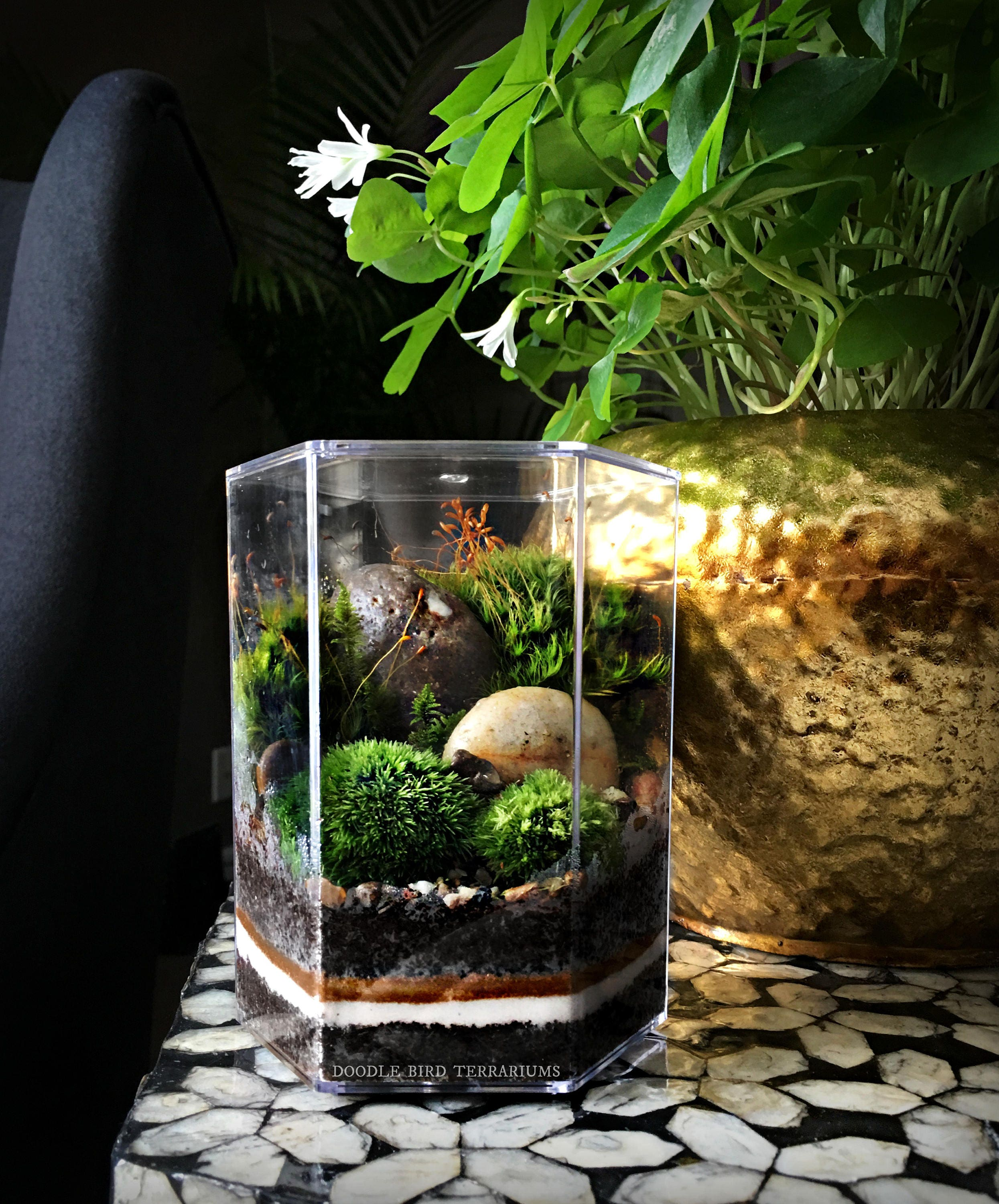 Desktop Landscape Terrarium In Geometric Hexagon Jar # Terrarium Dangle