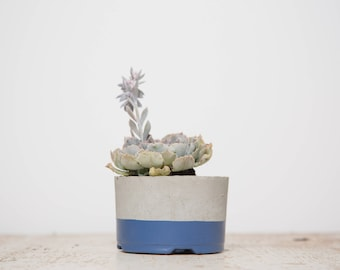 Mother's Day Gift for Her, Medium Concrete Planter, Navy