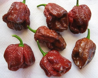 how to grow scotch bonnet peppers in pots