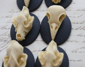 Bat Wolf Bird Skull Cameo Cabs Resin Cabochon Taxidermy Animal Steampunk Gothic Goth Skull Black Ivory 40x30mm 6 PIECES Mix Lot