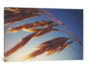iCanvas Windy Wheat Fields II Gallery Wrapped Canvas Art Print by Laura Marshall