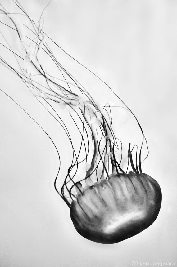 Black And White Jellyfish Photo