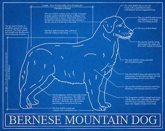 Dog blueprint etsy bernese mountain dog blueprint elevation bernese mountain dog art bernese mountain dog wall art malvernweather Gallery