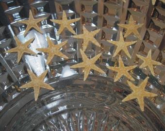 Private Listing for idoWhereTheRoosterCrows Mini Starfish -  Starfish Sea StarsAsk for Int'l ship rates