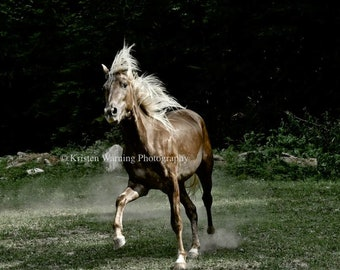 Horse Photo, Equine Art, The Dance, Dramatic Image, Country Living, Horses