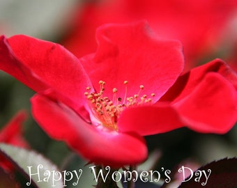 Women's Day greetings card