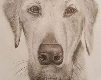 Pet Portrait - Custom Graphite Pencil Drawing of Your Digital Picture. See Desription For More Details.