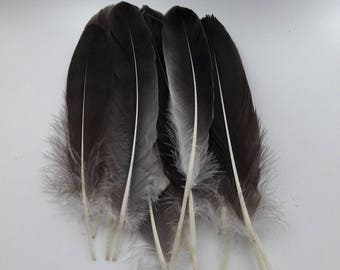 set of 5 feathers natural 15-20cm