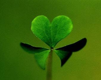 """Heart Shaped Green Clover Fine Art Photography """"lucky in love"""" Nature Photography Still life Photograph Cover print, Nature Wall Art"""