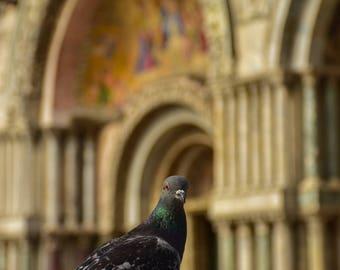 Venice photography, pigeon, St Marks Basilica, Fine art photography, travel photography, Europe wall art, Basilica