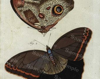 Original Antique Natural History Hand Colored Engraving of Butterflies dates 1790