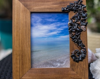 Seahorse Sharktooth Frame