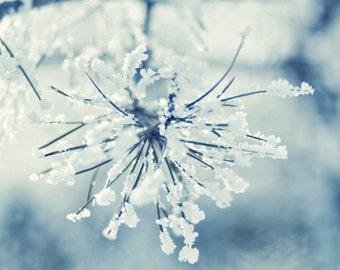 Frosty - 12 x 12 Fine Art Photograph - blue winter holiday home decor print