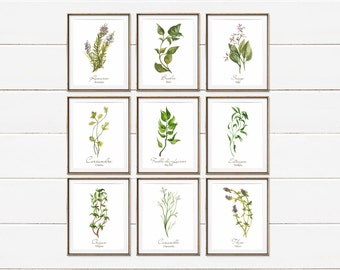 Herb Prints, French Kitchen Prints, Watercolor Herbs, Dining Room Art, Herb and Spice Print Set, Kitchen Wall Decor, Cooking Gift For Her