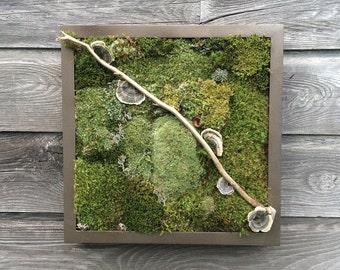 """Moss Art, 14"""" x 14""""  Vertical Garden, Woodland Wall Decor, Naturally Preserved Moss, Lichen, Maintenance Free, Woodland Zen, Wedding Gift"""
