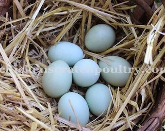 Blown Eggs, Sky Blue Eggs,  Hand blown Eggs, Real Eggs, Chicken Eggs, Craft Eggs