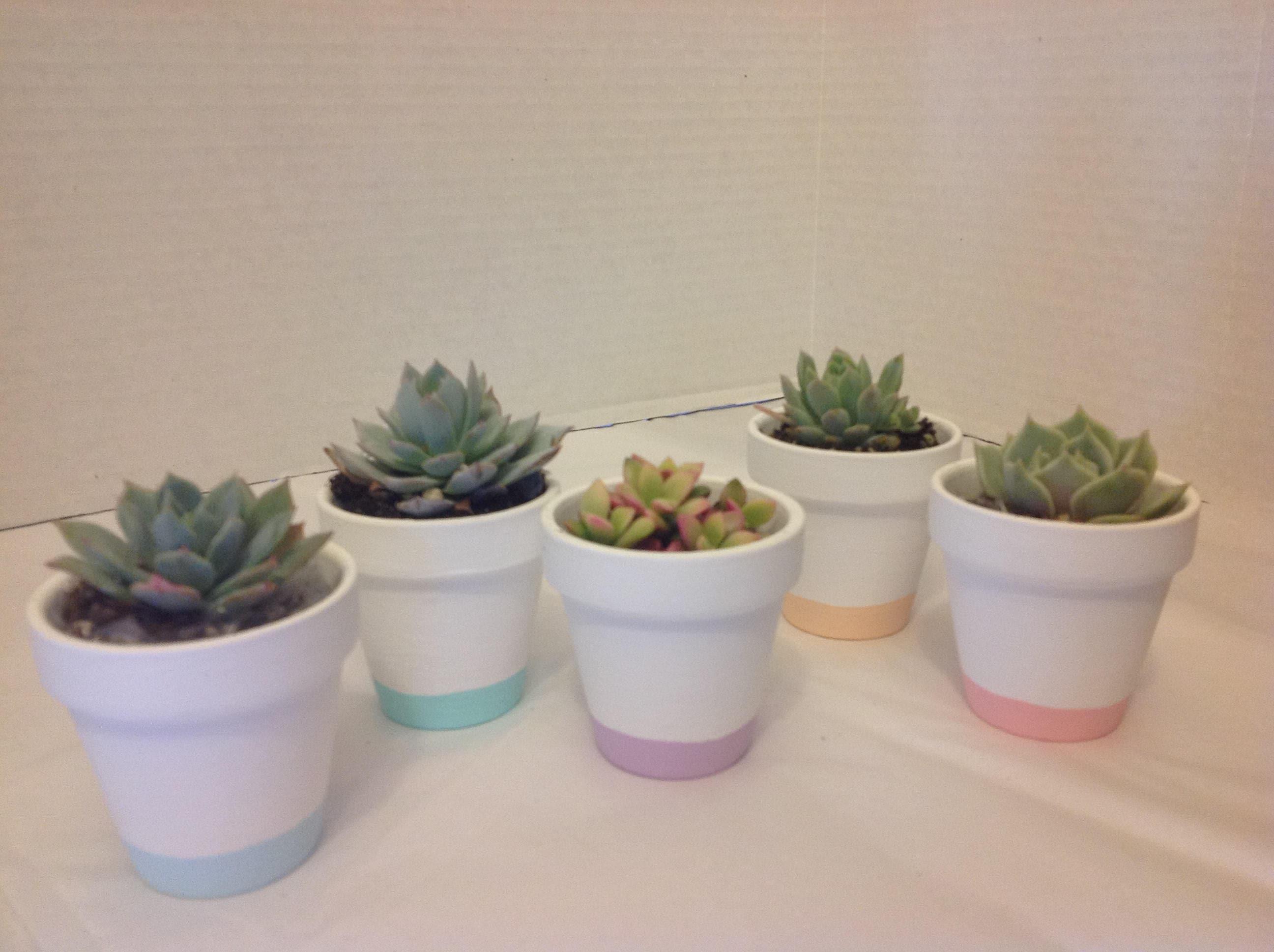 Succulent plant wedding favors. Beautiful terra cotta pot. DIY 50 ...