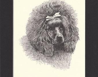 Poodle Vintage Dog Print C.Francis Wardle 1935 Drawing Mounted with Mat Poodle Print Poodle Dog