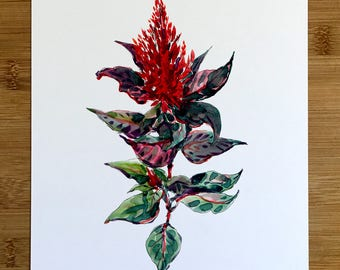Celosia - 8x10 Print from the Original Watercolor Sketch