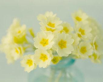 Flower Still Life Photo, Floral Art Print, Yellow Primrose Photograph, Shabby Chic Wall Decor