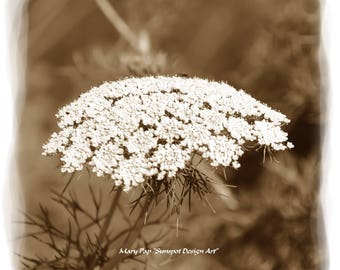white flower,Wall Art,Sepia photography, Sepia toned print, Nature print, Plant pfotograph, Botanical Art, Wild Flowers