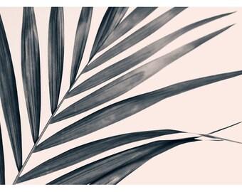 Palm Tree Print - Minimal Art - Minimalist Photograph - Tropical Art - Gray Palm #1 - Tropical Print - California - Florida - Oversize Print