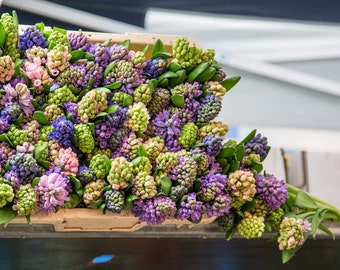 "Hyacinths in Columbia Road Flower Market, London - 8"" x 12"" Photography Print"