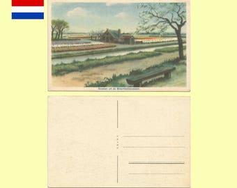 1950s Netherlands - Greetings From the Flower Fields (Bloembollenvelden) of Netherlands Postcard - Near Mint