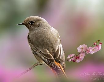 Bird in blossom pink